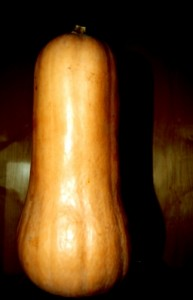 This is how to cook butternut squash