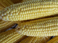This is how to cook corn on the cob on the stove